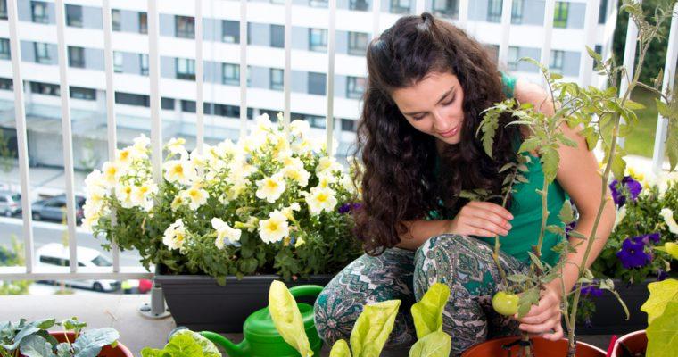 Comment cultiver des légumes en appartement